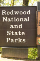 Operation Get About – Day 6 – The Redwood Forest